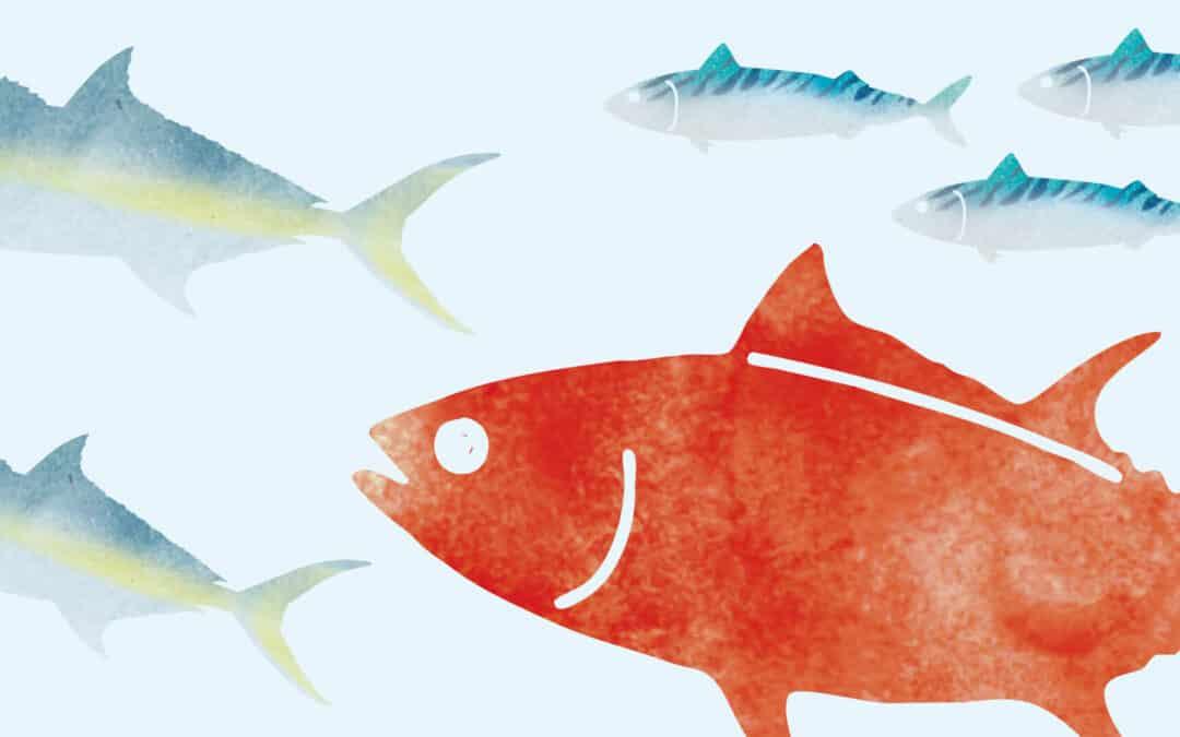 Ci sono anche pesci grassi. Lo sai che fanno bene?